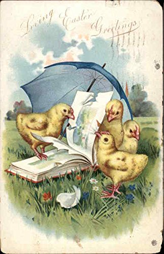 Four Chicks under a Blue Umbrella Pecking at a Book With Chicks Original Vintage Postcard