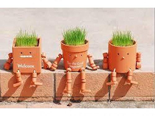 Robot crece-pelo: Amazon.es: Jardín