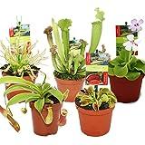 Dionaea + Nepenthes + drosera+ 3 plantas carnívoras