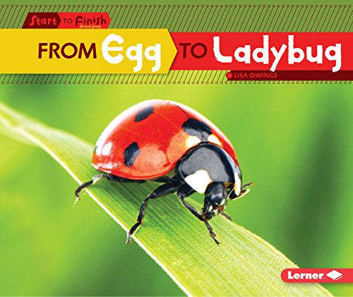 From Egg to Ladybug (Start to Finish, Second Series)