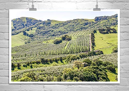 Napa Valley Art, Wine Country Art Print