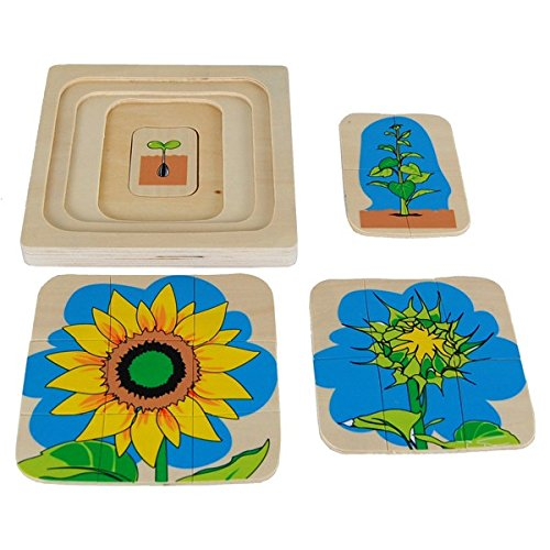 ri Sunflower Life-Cycle Puzzle ()