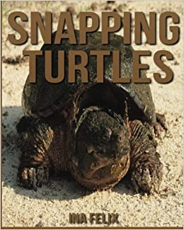 The Face and Beak of The Snapper, or common Snapping Turtle