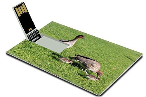 luxlady-32gb-usb-flash-drive-20-memory-stick-credit-card-size-image-id-24693144-duck-family-in-yarra