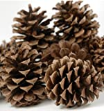 "24 Ponderosa Pine Cone Natural 3""- 5"" Hand Selected All Natural Premium Quality Cones Decorative Home Decor Bowl Displays Crafting UNSCENTED"