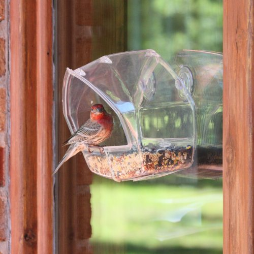 Review Birdscapes Clear Window Feeder