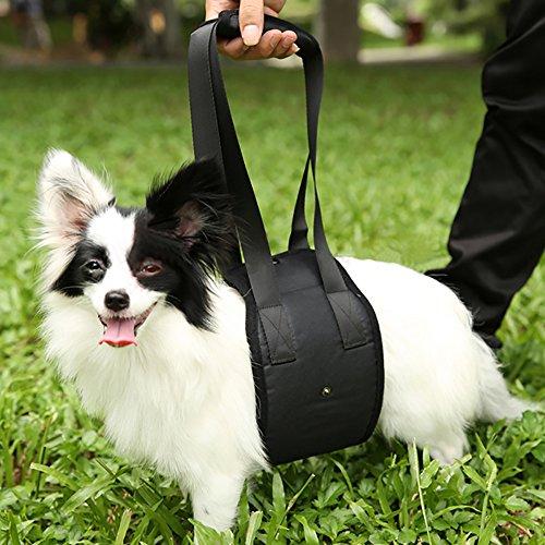dog back support harness - 2