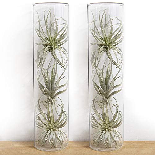 "Chive - Set of 2 Cylinder Vase, 2.5"" Wide 7"" Tall Wall Mounted for Wall Art, Decorative Floral Vase for Wall Mounted Terrariums"