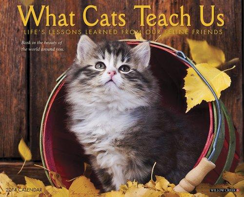 - What Cats Teach Us 2014 Wall Calendar