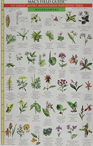 Great Smoky Mountains National Park: Trees & Wildflowers (Smoky Mountain Wildlife)