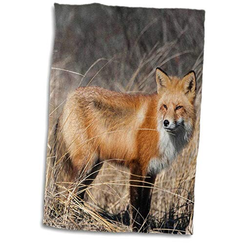 east urban home Miles Red Fox Standing Tea Towel O47421 from east urban home