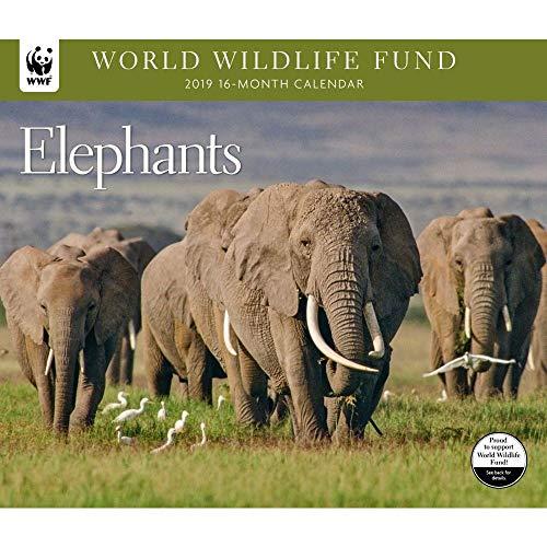 2019 Elephants WWF Wall Calendar, by Calendar Ink