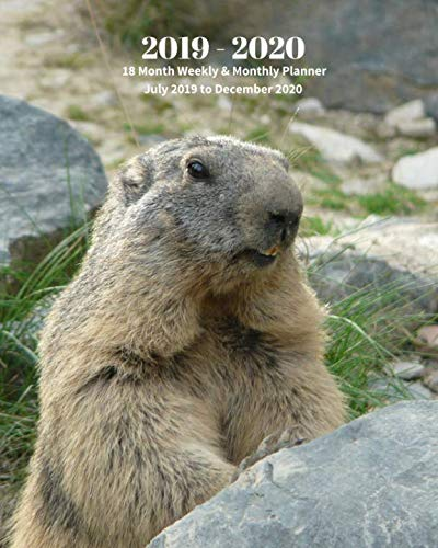 2019 - 2020 | 18 Month Weekly & Monthly Planner July 2019 to December 2020: Marmot Wildlife Animal Vol 4 Monthly Calendar with U.S./UK/ ... Holidays- Calendar in Review/Notes 8 x 10 in.