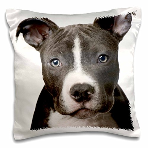 (3dRose American Pit Bull Terrier Puppy - Pillow Case, 16 by 16-inch (pc_4240_1))