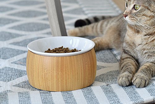 TigerLi Raised Cat Food Bowl, Elevated N - Stylish Cat Shopping Results
