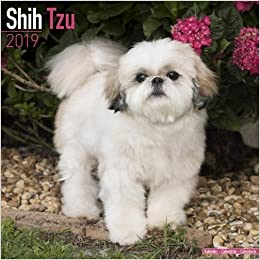 Shih Tzu Calendar 2019 Avonside Publishing Ltd 9781785803734