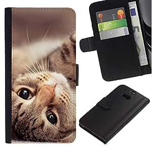 Maine Coon Cat American Shorthair - la tarjeta de Crédito Slots PU Funda de cuero Monedero caso cubierta de piel HTC One M8