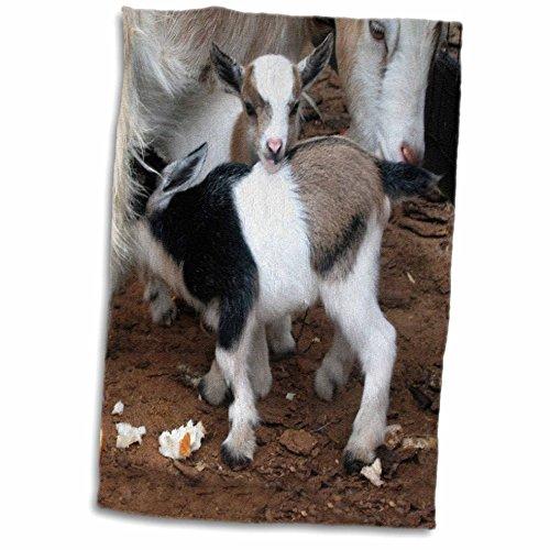 "3D Rose Pygmy Goat Family Towel, 15 x 22"""