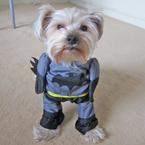 Alfie Pet by Petoga Couture - Superhero Costume Batman - Siz