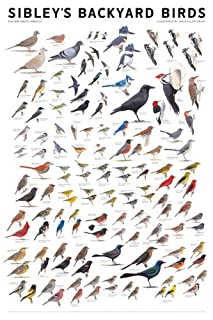 Sibley's Backyard Birds: Eastern North America (0982510209) | Amazon Products