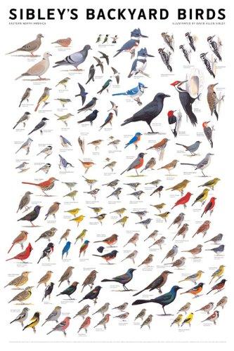 backyard birds of north america - 8