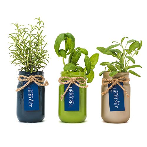 (Thoughtfully Mason Jar Herb Garden | Contains Rosemary, Basil and sage Seeds with Soil pods to Grow Your own Herbs)
