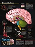 The Human Brain Poster Series - 5 Poster Set. Brain Facts, Brain Structure, Brain Health and Safety, Brain Functions and Brain Neurons.
