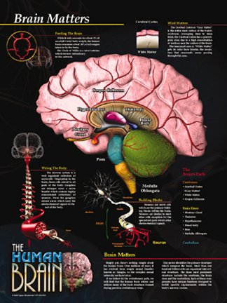 The Human Brain Poster Series - 5 Set. Brain Facts, Brain Structure, Brain Health and Safety, Brain Functions and Brain Neurons