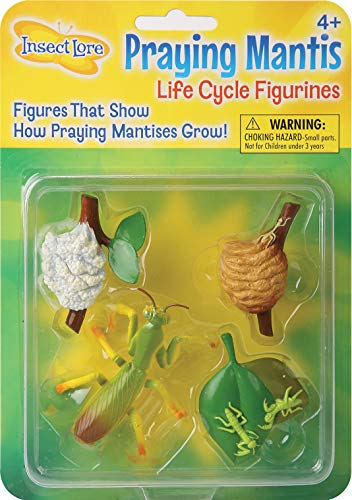 - Praying Mantis 4 Piece Life Cycle Figures - 2