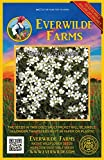 Everwilde Farms - 2000 Snow-in-Summer Wildflower Seeds - Gold Vault Jumbo Seed Packet