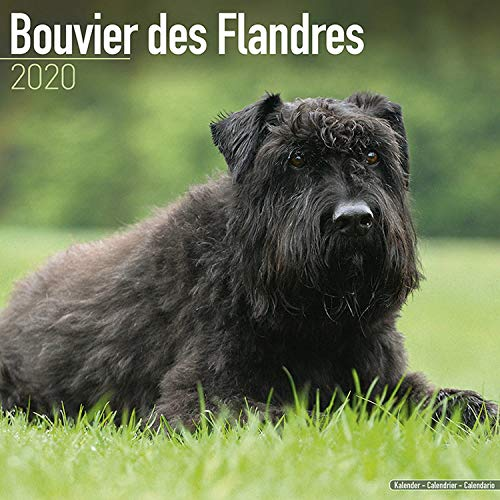 Bouvier des Flandres (Euro) Calendar - Dog Breed Calendars - 2019 - 2020 Wall Calendars - 16 Month by Avonside (Multilingual Edition)