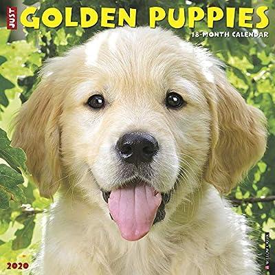 Just-Golden-Puppies-2020-Wall-Calendar-Dog-Breed-Calendar