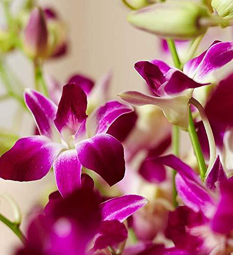 1800Flowers Exotic Breeze Orchids Flower Bouquet with Purple Vase (20 Flowers)