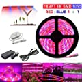 Topled Light Led Plant Grow Light 16 4ft Grow Strip Light With Rotate Dimmer For Indoor Plants Full Spectrum Smd 5050 Red Blue 4 1 Growing Rope Light For Aquarium Greenhouse Hydroponic 16 4ft