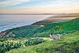 Point Reyes Photograph, Point Reyes Art Print, California Coast Art, Point Reyes Picture