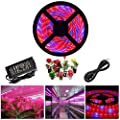 Zcplus Led Strip Light Plant Grow Lights 16 4ft 5050 Smd Waterproof Full Spectrum Red Blue 4 1 Growing Lamp For Aquarium Greenhouse Hydroponic Plant Garden Flowers 5 M