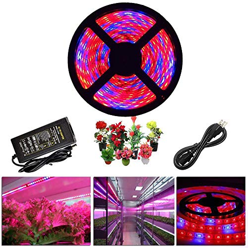 Blue And Red Led Lights For Growing in US - 5
