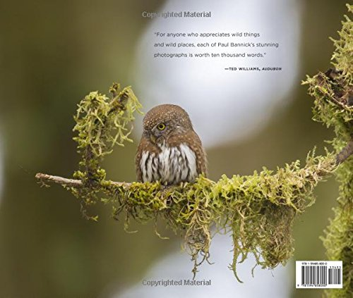 Owl-A-Year-in-the-Lives-of-North-American-Owls