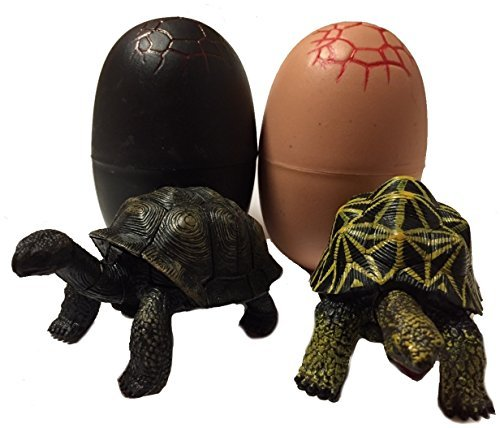4D Master Turtle Figure 2 Body A Pair Star Tortoise  Aldabra Giant Tortoise Prefabricated Egg Cased
