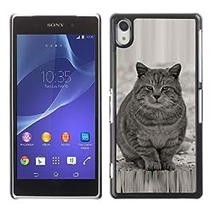 Qstar Arte & diseño plástico duro Fundas Cover Cubre Hard Case Cover para SONY Xperia Z2 / D6502 / D6503 / D6543 / L50W / L50t / L50u ( Cute Fat Cat Grey White Furry Beast)