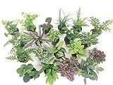 2'' Mini Fairy Garden & Terrarium Plants Assorted Varieties (Pack of 2 Plants)
