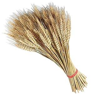 TOOGOO Large Wheat Yellow Natural Wheat Sheaf Bundle Premium DIY Home Kitchen Table Wedding Centerpieces Decoration 59