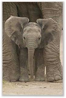 amazon com framed art print big ears baby elephant outer size