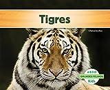 Tigres (Grandes Felinos/Big Cats) (Spanish Edition)