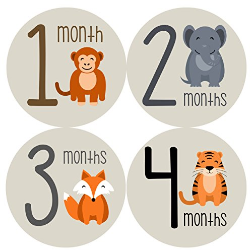 Monthly Baby Stickers by Months In Motion | 12 Month Milesto