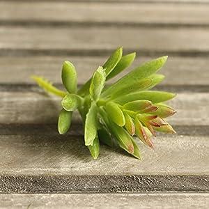 Supla 9 Pcs faux succulents unpotted Vinyl Artificial Succulent Galanthus Cactus Plants Artificial Plants 3 Colors fake succulents Flower Arrangement Craft Making 5
