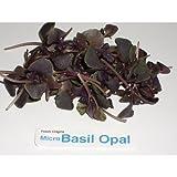 Micro Greens - Basil Opal - 4 x 8 oz