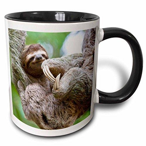3dRose 87172_4 Brown-Throated Sloth Wildlife, Corcovado Costa Rica-SA22 JGS0021-Jim Goldstein Two tone black mug, 11 oz, White
