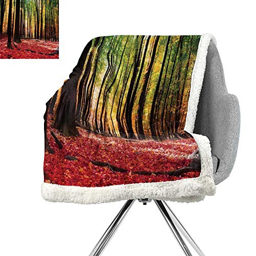 Farm House Decor Collection Throw Blanket,Warm Autumn Scenery in Forest Sun Casting Rays of Light Through Trees Picture,Yellow Green,Super Soft Blanket for Coach,Sofa,Bed W59xL78.7 Inch -