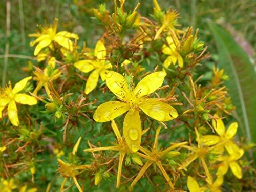 Bestselling St Johns Wort Herbal Supplements